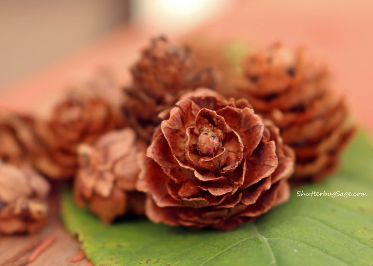 Mini Pine Cones on a Leaf | Mini pine cones, Pine cones, Cones
