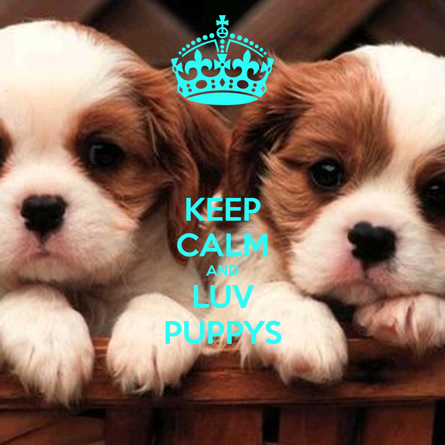 Keep calm and biohazard on keep calm and carry on image generator - Keep Calm And Luv Puppys Keep Calm And Carry On Image Generator