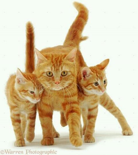 Orange Kitties Have The Best Personalities Cats And Kittens Happy Cat Cats