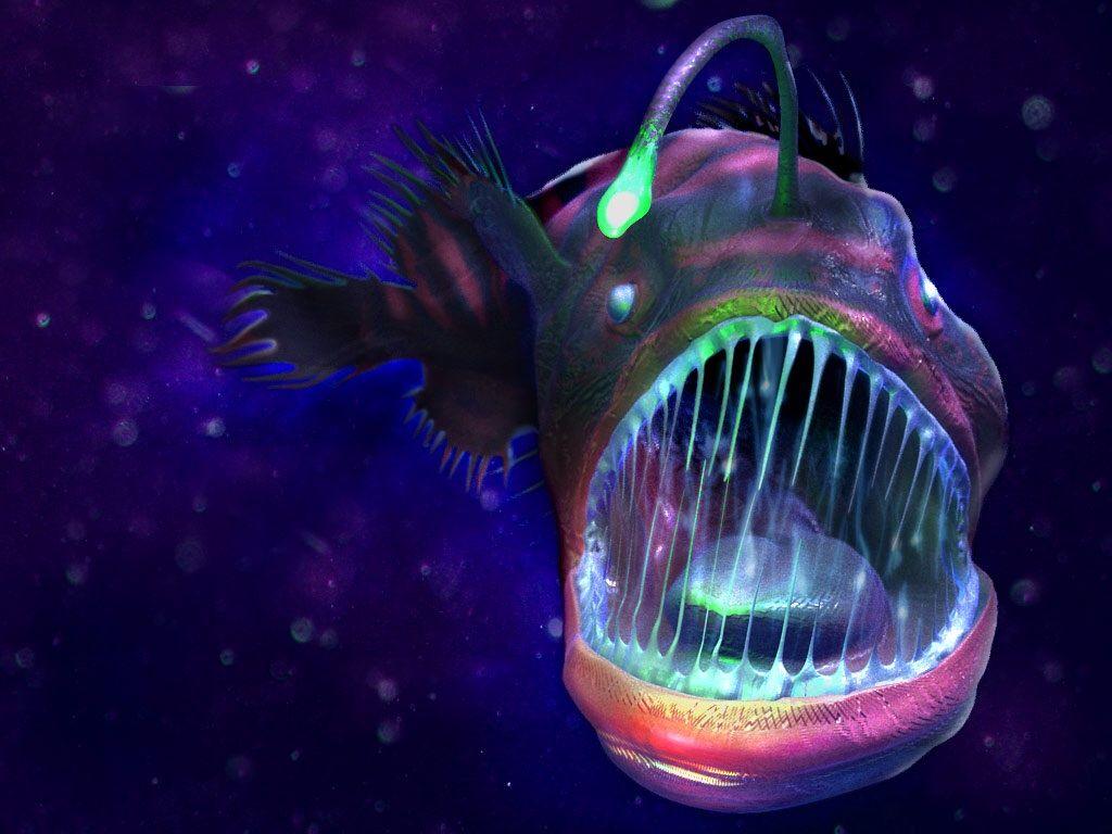 the deep sea dwelling angler fish bioluminescence