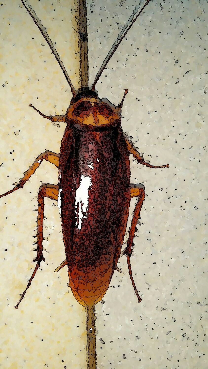 Taking The Hastle Out Of The Bug Problem In Your Attic With A Pestcontrol Service That Offers A Complete Cleaning Diy Pest Control Pest Control Bug Problem