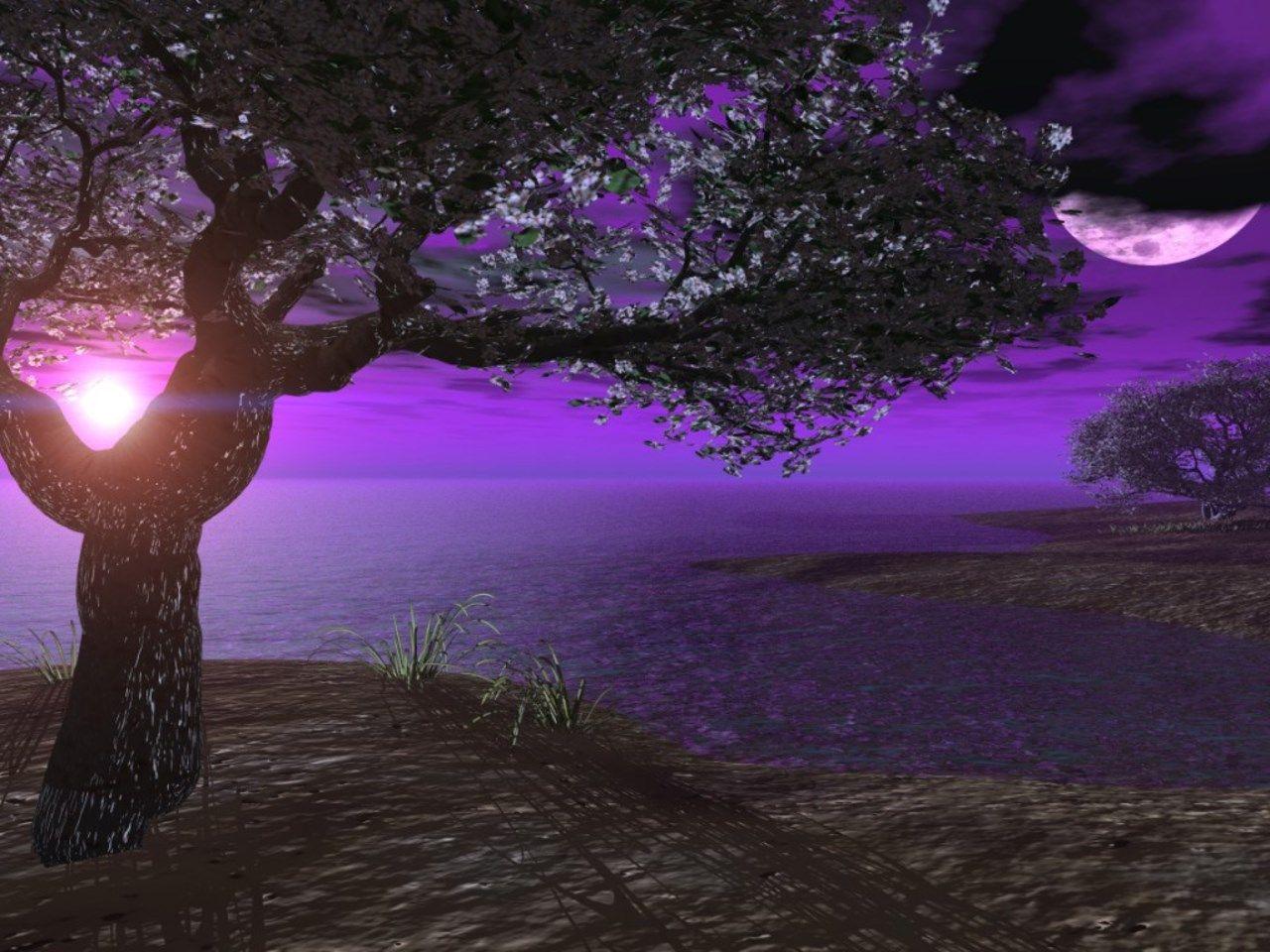 nature | Purple sunset, Moon art, Wallpaper backgrounds
