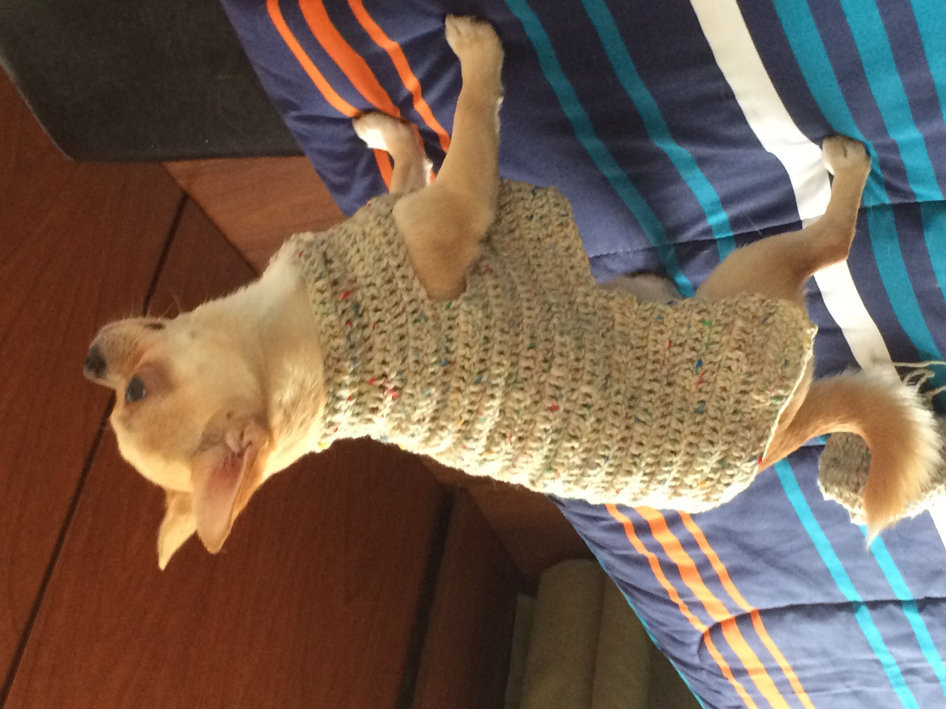 Chaleco tejido a crochet con lana pura para Chihuahua. | Mis ...