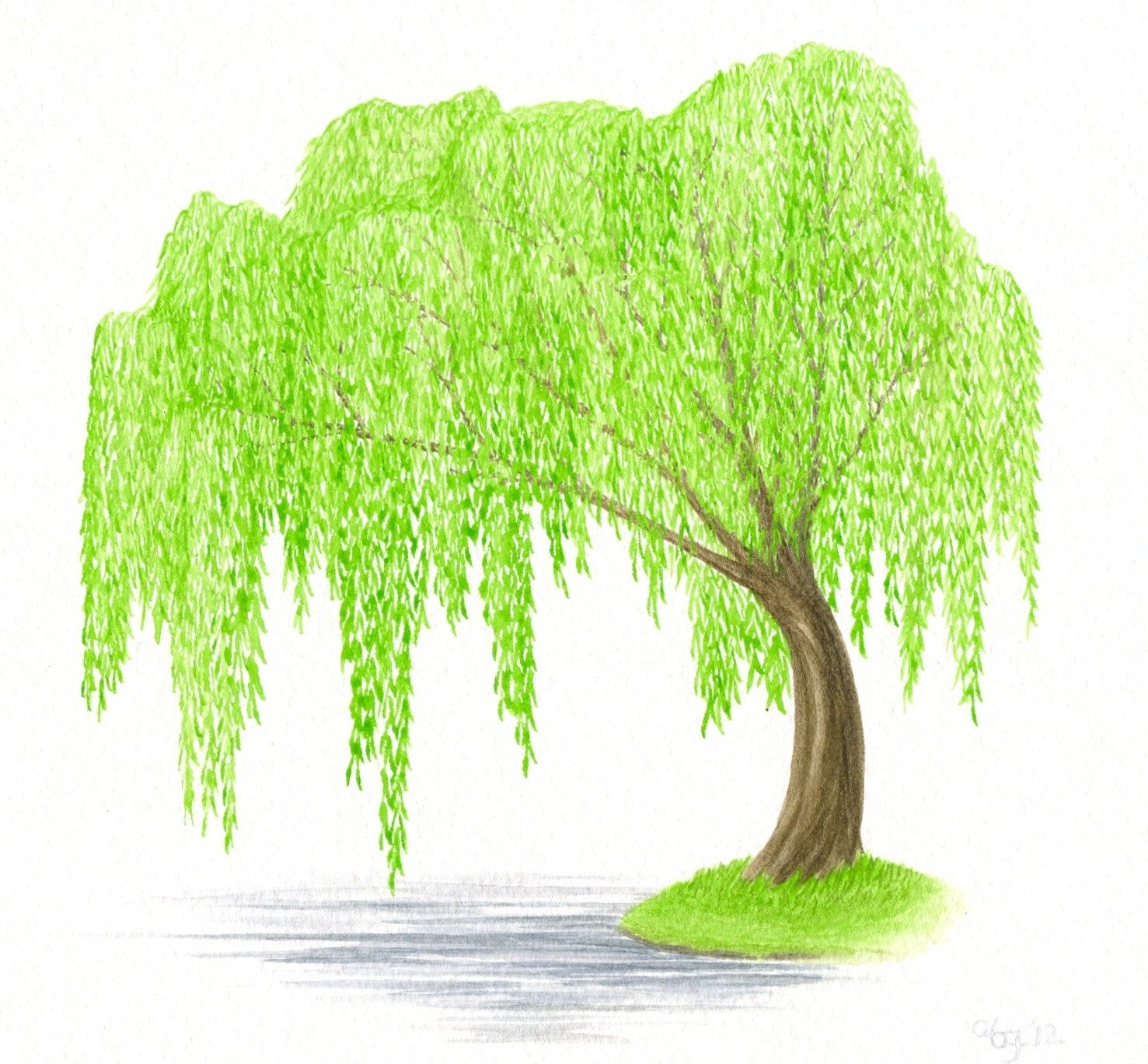 Uncategorized How To Draw A Weeping Willow original painting tree watercolor weeping willow and water green brown 8 x 10