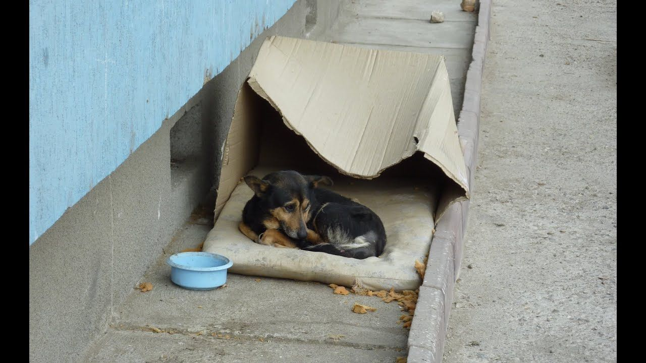 Homeless Dog Living In A Cardboard Box Gets Rescued Has A Heartwarming Homeless Dogs Dogs Rescue Dogs