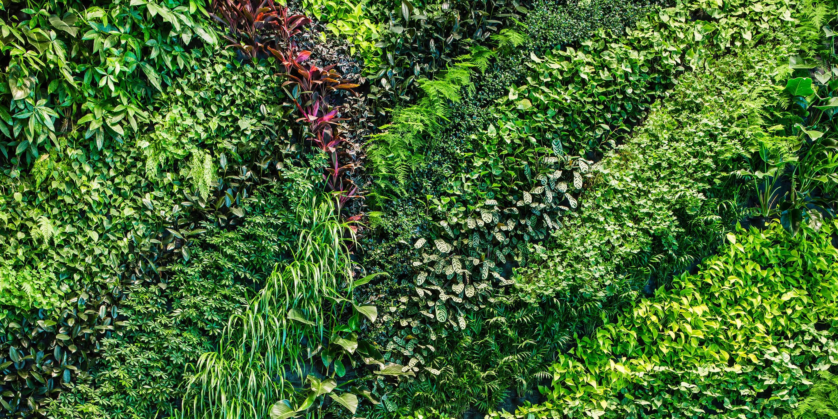 Image result for plant wall texture   TIMIrest in 2019   Plant wall, Vertical garden design ...