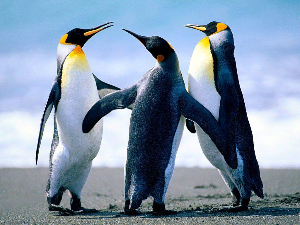 (31) VOA Indonesia (voaindonesia) Twitter Pinguins