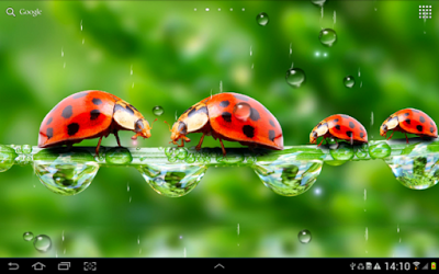 Rain Live Wallpaper For Android App Free Download With Images