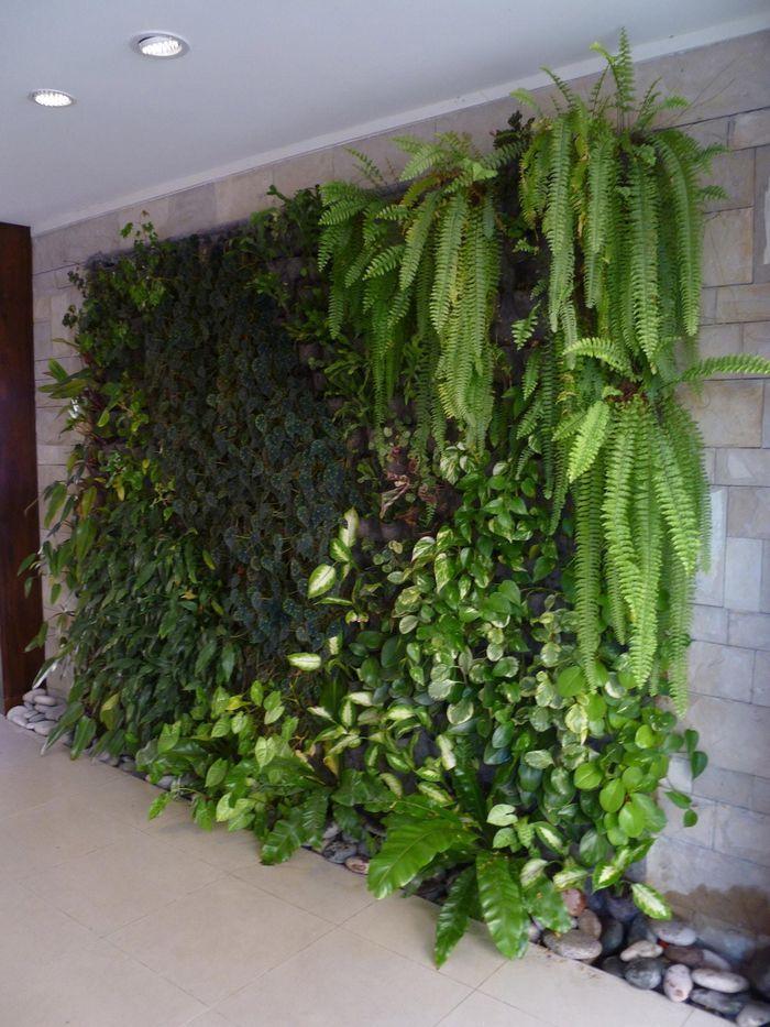 Fitorremediacion del aire interior jardines verticales for Plantas usadas para jardines verticales