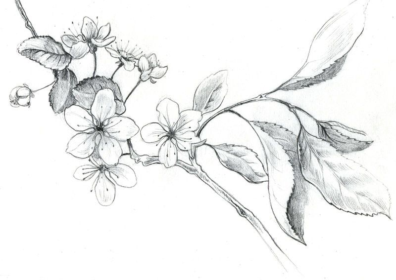 Pin By Morgane On Tatoo Tigre Et Fleurs Cherry Blossom Drawing Blossom Tattoo Flower Drawing