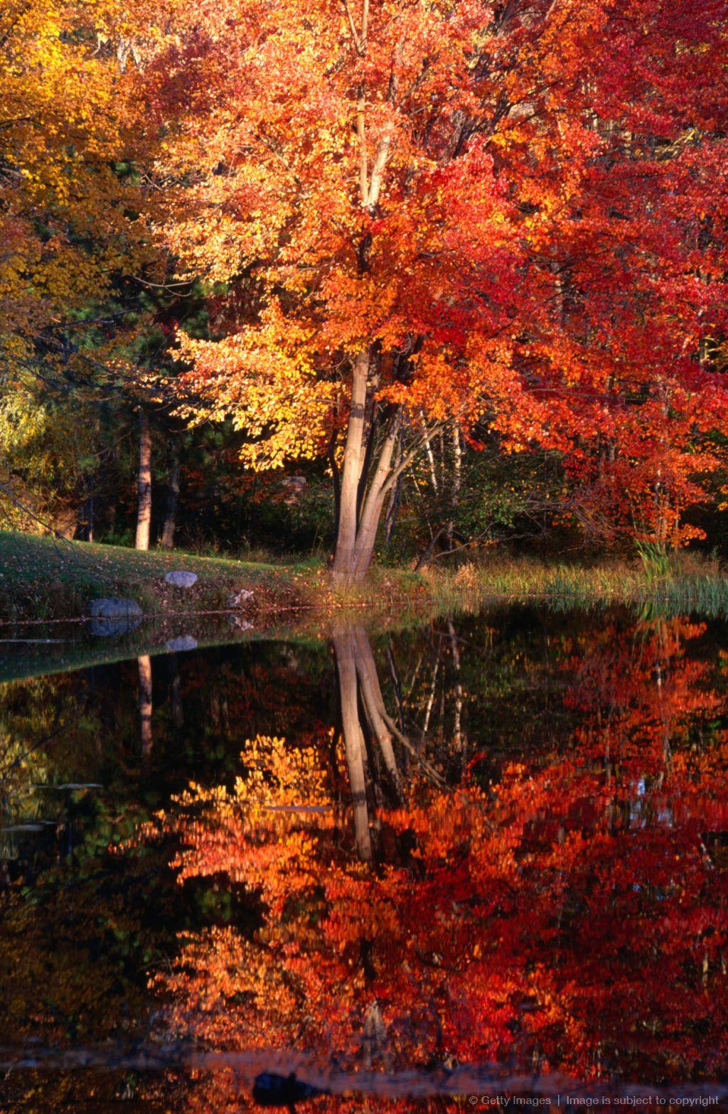 Beautiful Autumn Sunset: Autumn Trees, Autumn Scenes