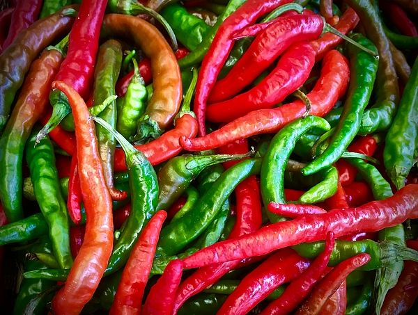 There are to be soaked in salt water, and slowly roasted over a charcoal grill, cooled down in the sun, and then bottled in pure olive oil, to be used as a chilli oil. Their flavour is as sharp as their colours.