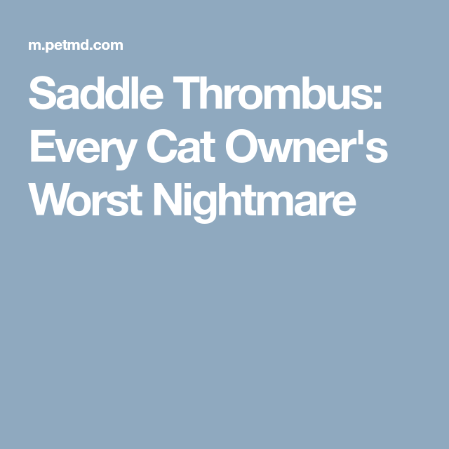 saddle thrombus every cat owner s worst nightmare tehja