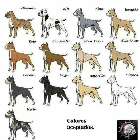 Pin De Irena Luzar En Dogs Razas De Perros Pitbull Perro Pitbull Blanco Perros Bulldog