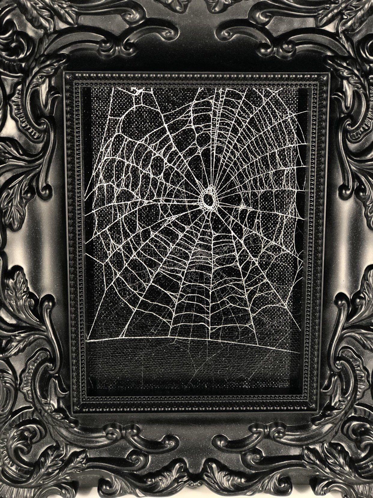 Genuine Preserved Spider Web Framed Spider Web Real Spider Web Etsy Spider Web Real Spiders Framed Art