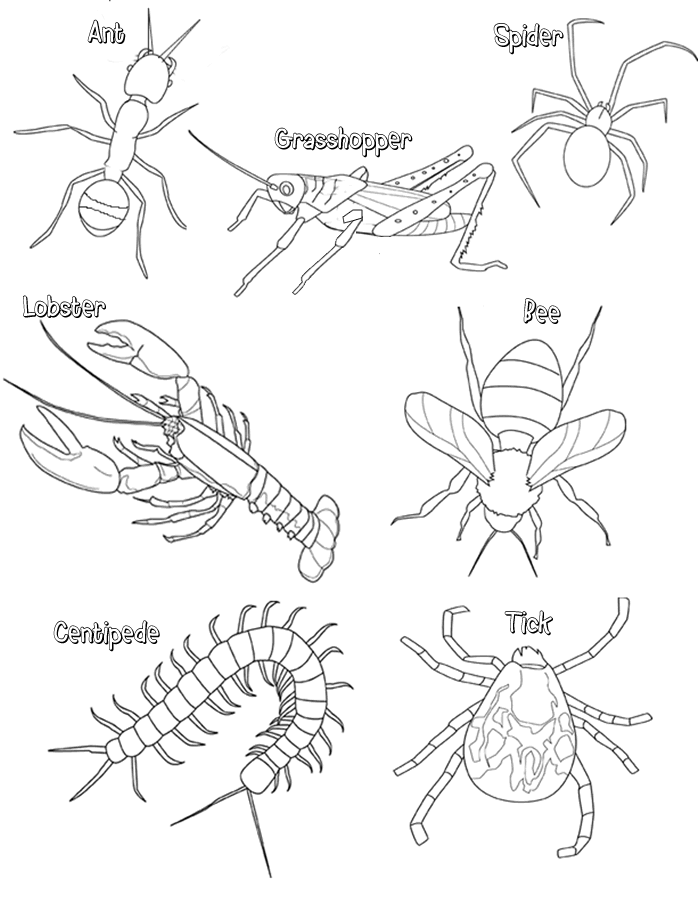 Printable Worksheets the grasshopper and the ant worksheets : arthropods | Resources | Pinterest | Worksheets, Activities and ...