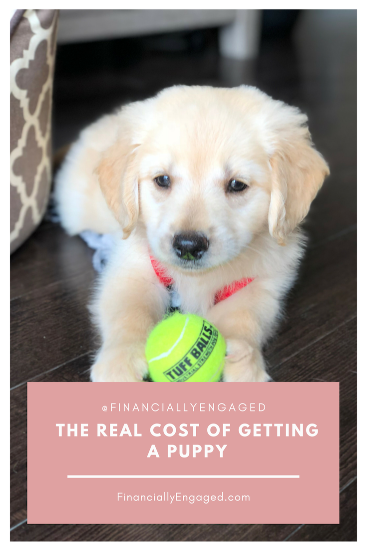 The Cost Of A Puppy Our First Year Financially Engaged Puppies Kittens And Puppies Puppy Care