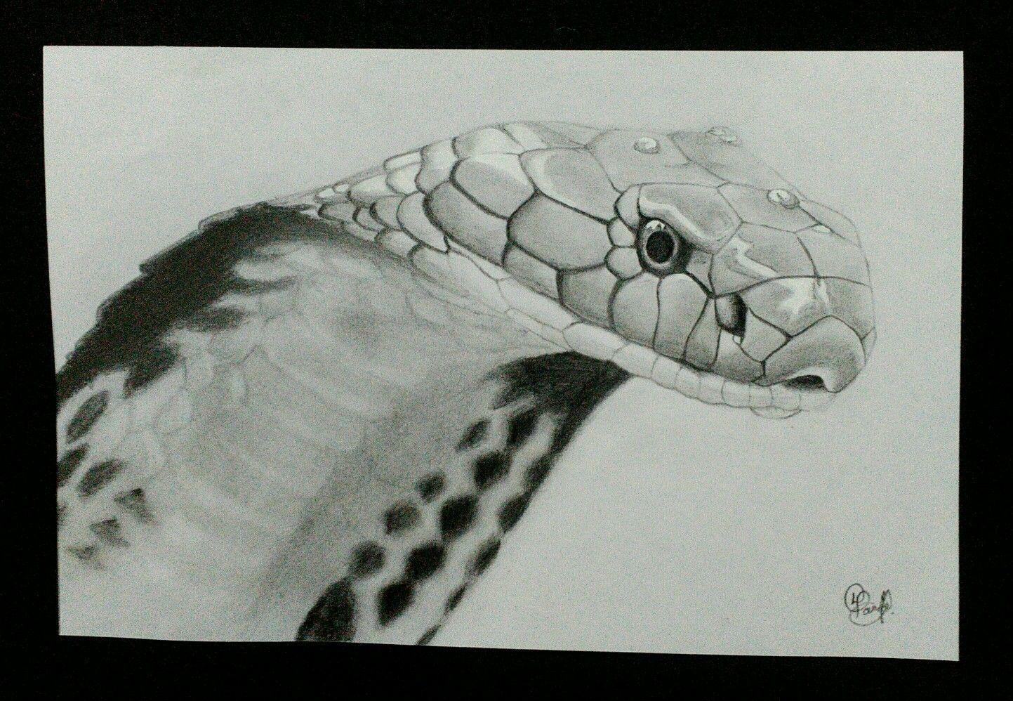 Pencil sketch the king cobra