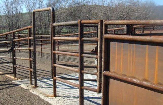 Cattle Corral Cattle Barn Ranch Project Pinterest