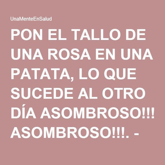 PON EL TALLO DE UNA ROSA EN UNA PATATA, LO QUE SUCEDE AL OTRO DÍA ASOMBROSO!!!. - UnaMenteEnSalud