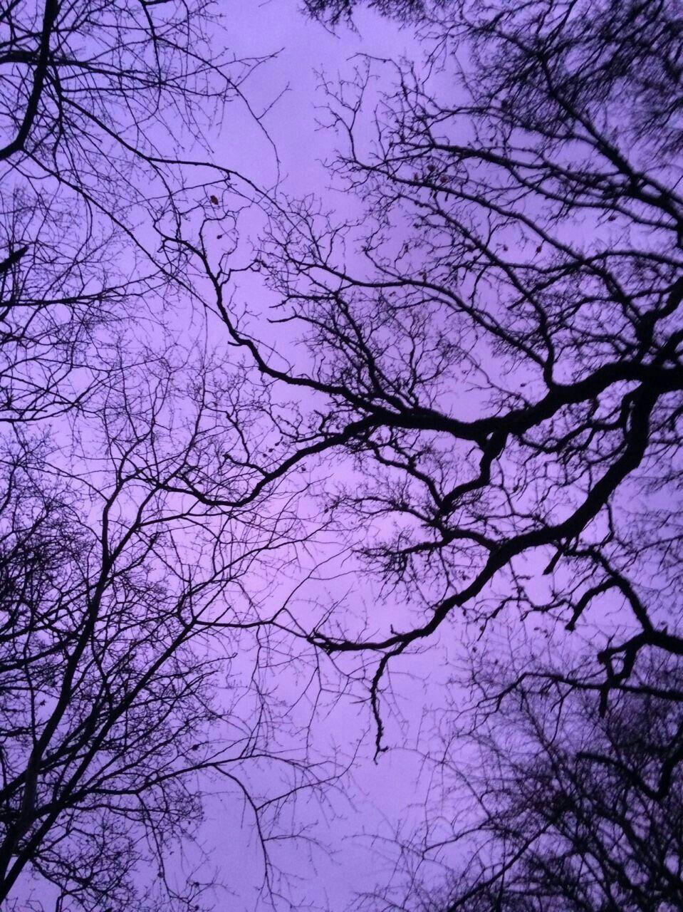 Aesthetic   Purple   Dark   тнeмe   Purple aesthetic ...