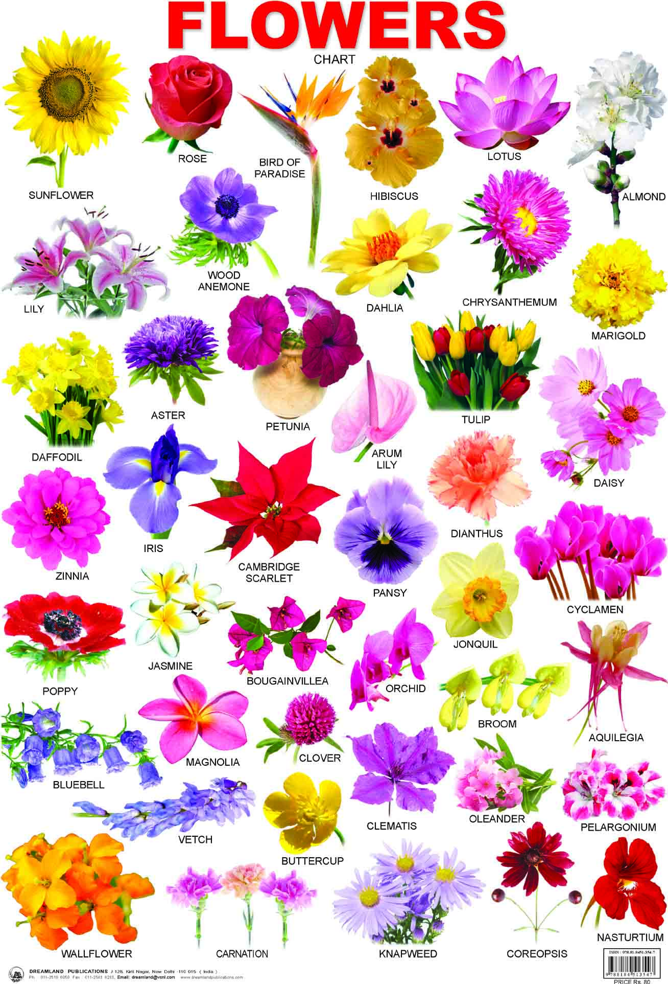 types of flowers with names and meanings. buy educational charts series: flowers at types of with names and meanings