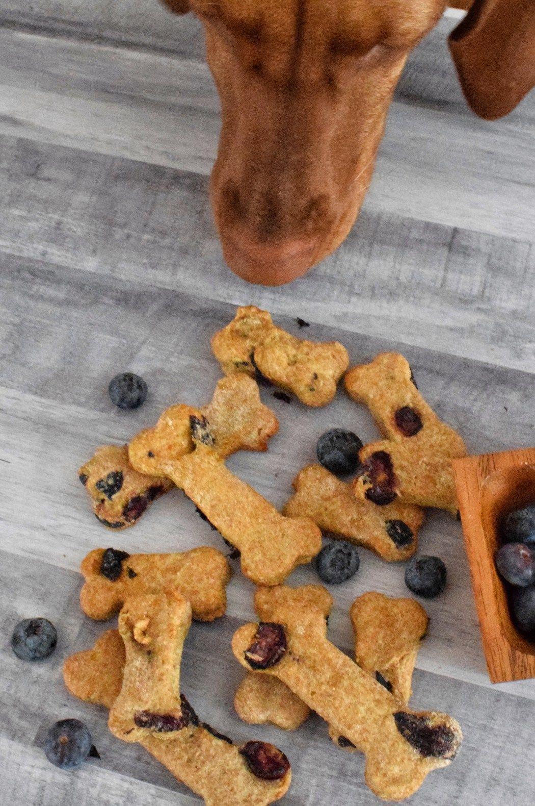 4 Ingredient Blueberry Dog Treats Recipe Dog Cookies Dog