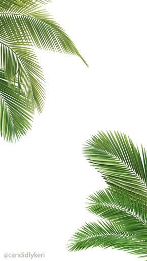 Palm tree and white wallpaper free download for iphone android or desktop background on the blog - Palm tree wallpaper for android ...