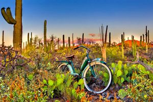 """Saguaro National Park by Todd Van Fleet - No bike should spend its life on the sidewalk. That's why Todd Van Fleet rescues bikes, """"Snapping the shutter is the easy part. Finding the bikes is where the real adventure begins."""" Toddrescues old cruiser bikes from the corners of barns, sheds, and attics; then straps them to his back and hikes to far-flung, lonely landscapes giving each bike a story in a photo. ...Click any image and read more and see more. Tags…"""