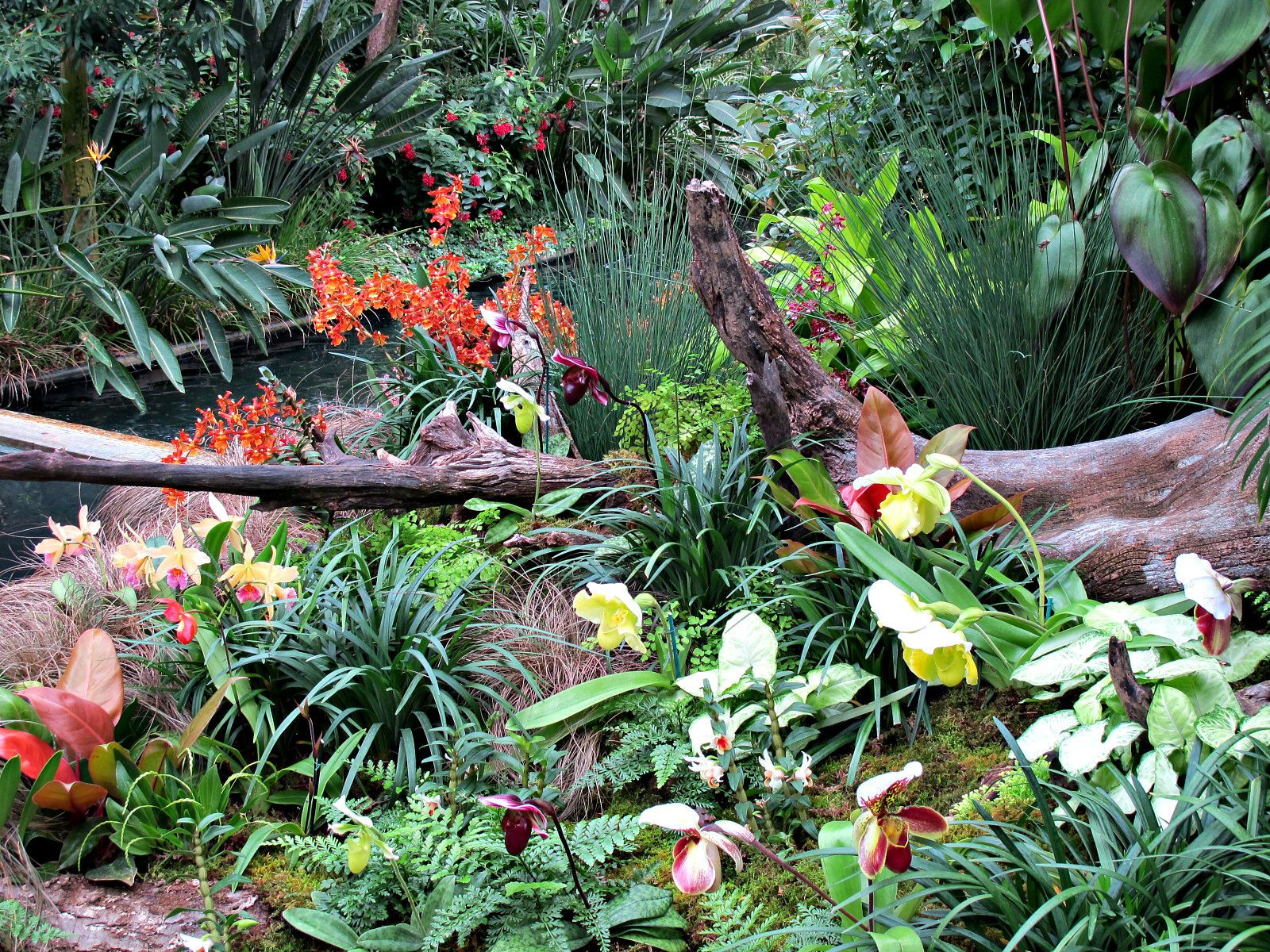 https://flic.kr/p/GZm1mE | Orchids, Conservatory Display, Longwood Gardens IMG_8000 | Longwood Gardens, Kennett Square, PA USA Photograph by Roy Kelley Roy and Dolores Kelley Photographs