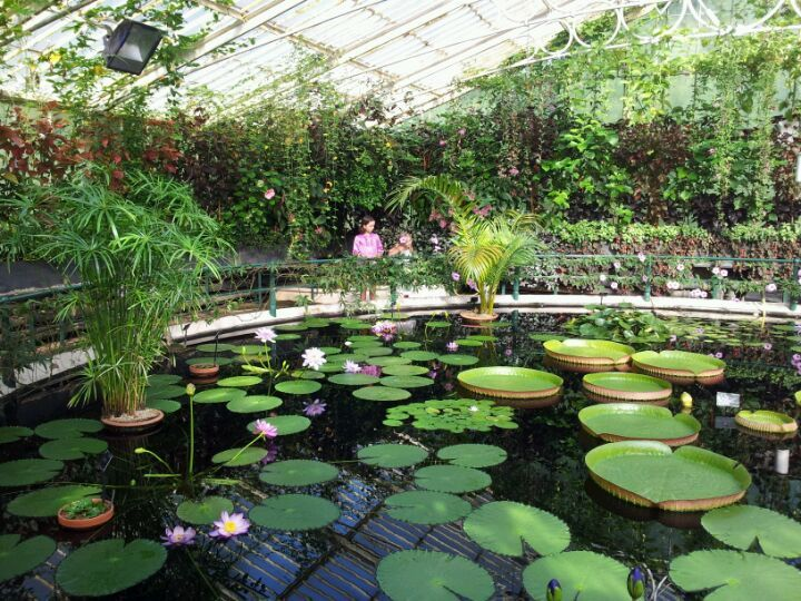 Royal Botanic Gardens in Kew, Greater London