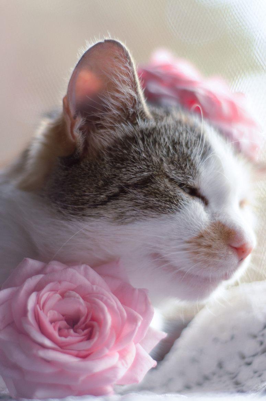 Картинки с добрым утром котики с цветами, февраля прикольные открытки