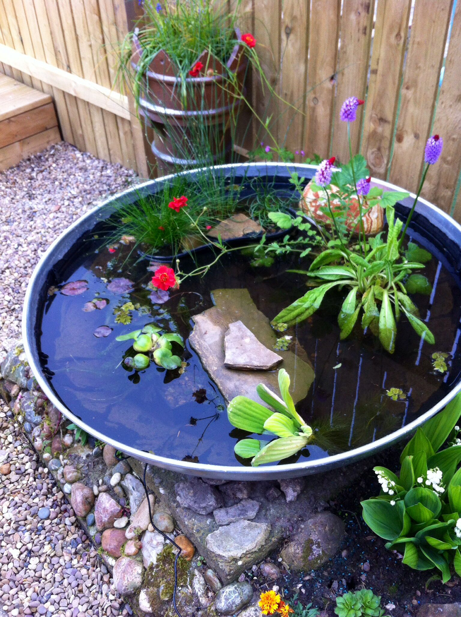 My container pond. Inspired by Pinterest! Been great fun ...