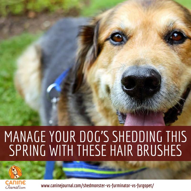 Best Dog Shedding Brush Shedmonster Vs Furminator Vs Furgopet More Dog Shedding Dogs Dog Grooming