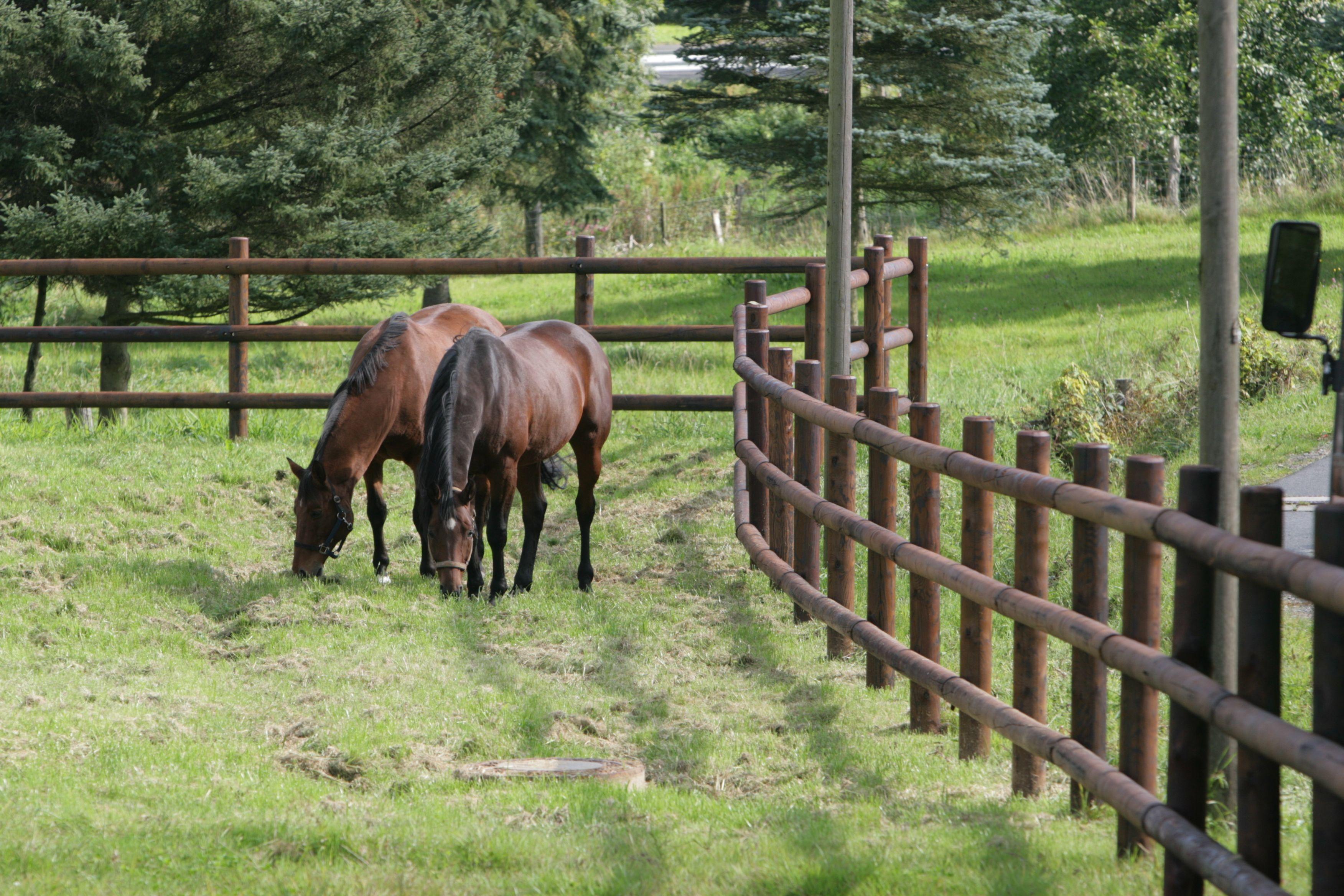 chevaux en enclos p ture pour chevaux avec cl ture en bois de qualit vision board. Black Bedroom Furniture Sets. Home Design Ideas