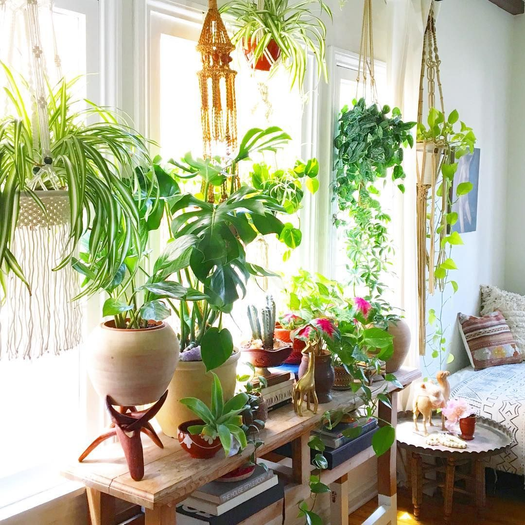 Kitchen Window Sill, Use Cracket Too, To Layer Up, And Ceiling Hook For A Hanging  Plant!