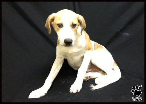 Meet Tucker He And His Five Littermates Came To The Houston Spca His Brothers And Sisters Were Quickly Adopted But No On Animal Behavior Animals Adoption