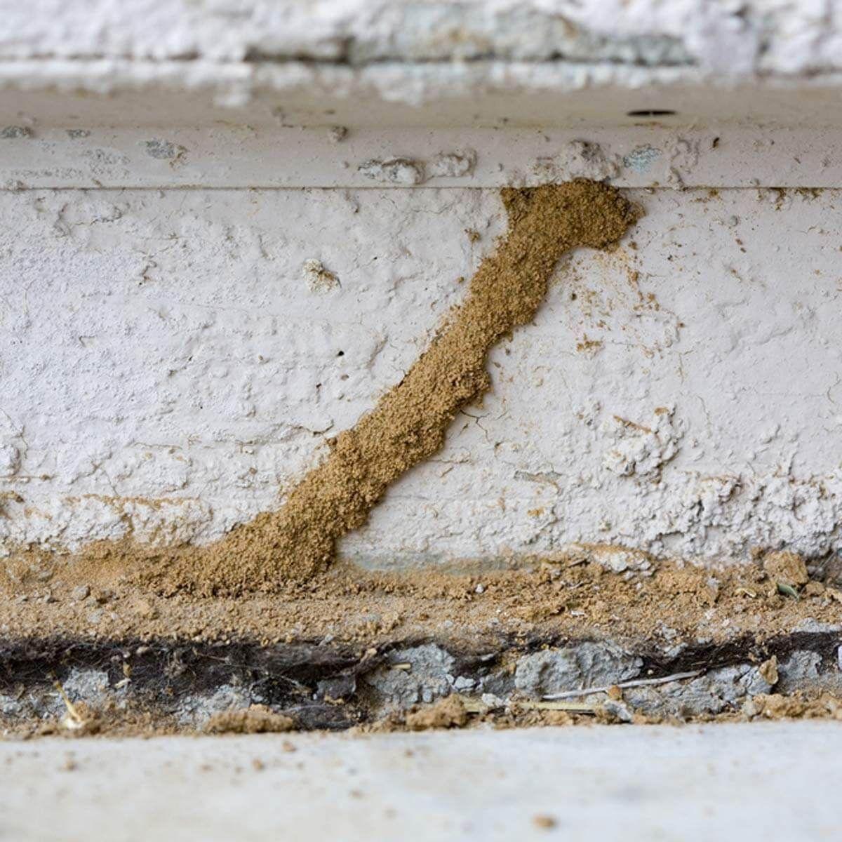 Diy Termite Control 13 Must Know Tips For Diy Termite Control Termite Inspection Termite Control Wood Termites