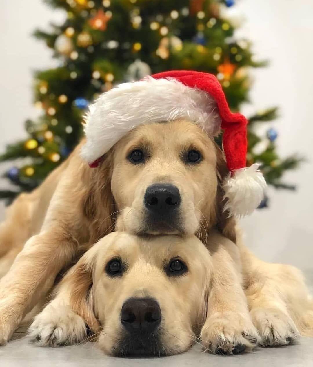 Pin By לירי שירה בצלאל On חיות חמודות ממש I Love Dogs Dog