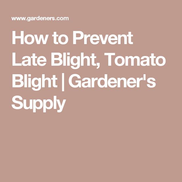 How to Prevent Late Blight, Tomato Blight   Gardener's Supply