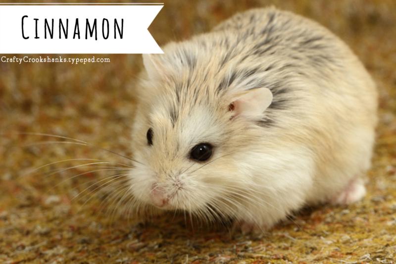 Roborovski Dwarf Hamster 101 Essential Basics Care And Dwarf Hamster Hamster Cute Hamsters
