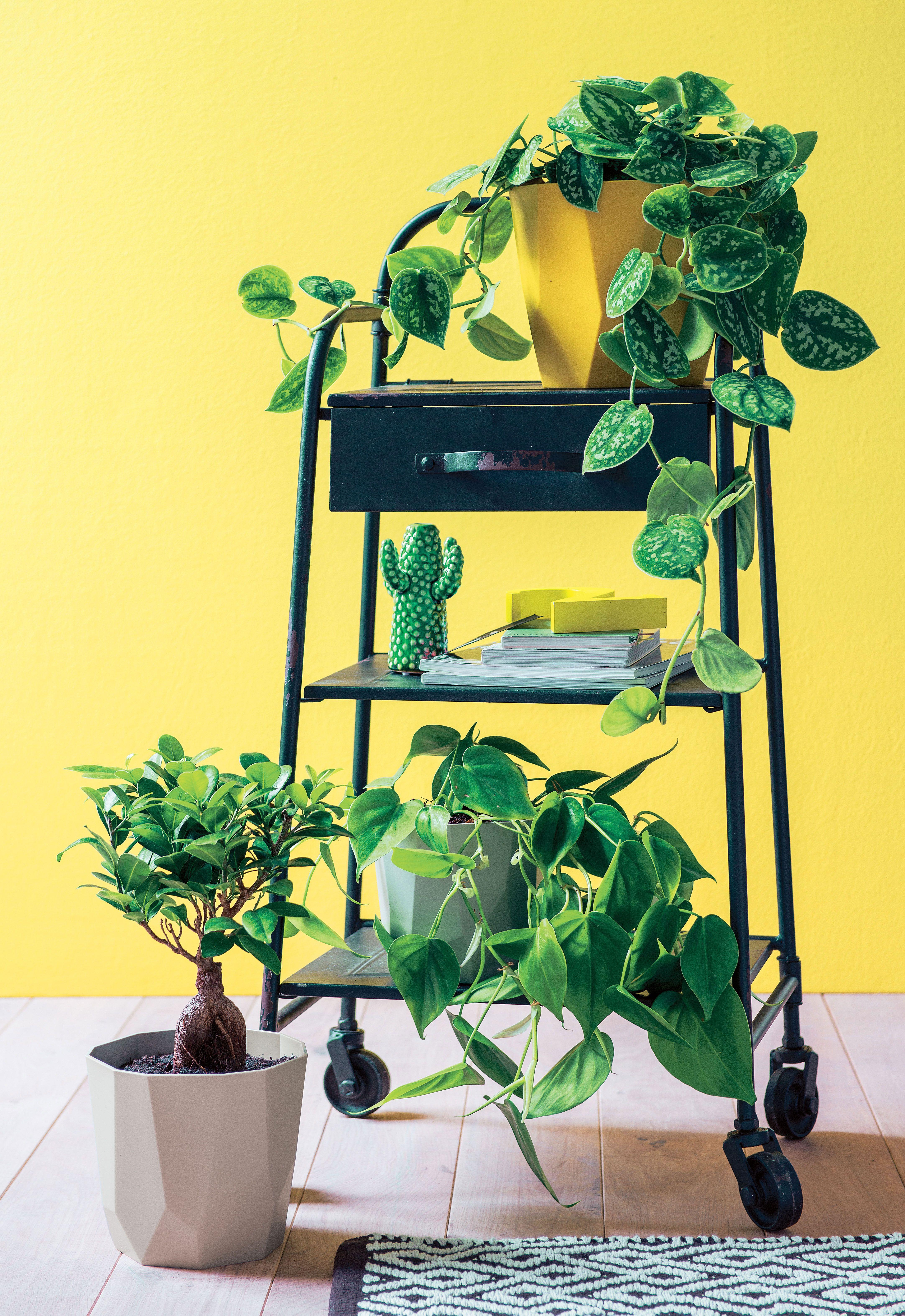 Deco A Tous Les Etages green lab truffaut - des plantes à tous les étages   plants