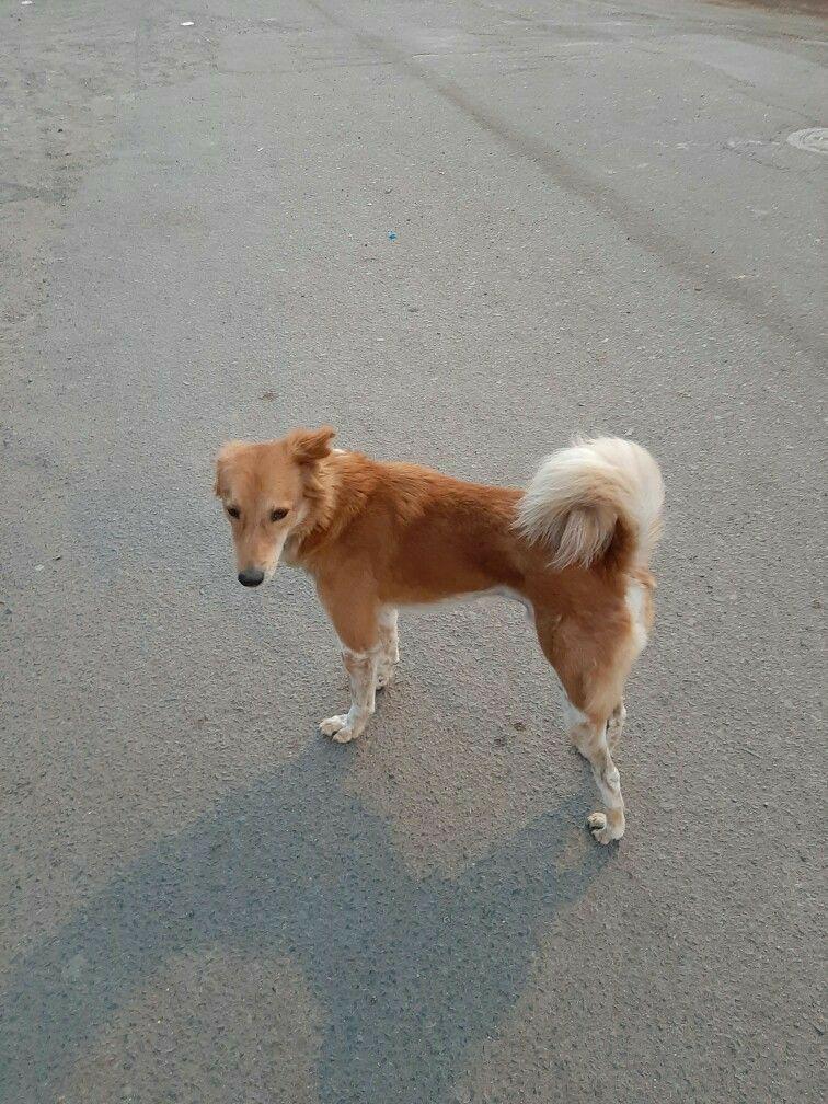 Dogs So Adorable Image By Pris Lobo Street Dogs Dogs Corgi