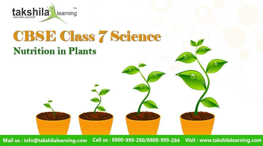 Ncert Cbse Class 7 Science Nutrition In Plants Notes Videos