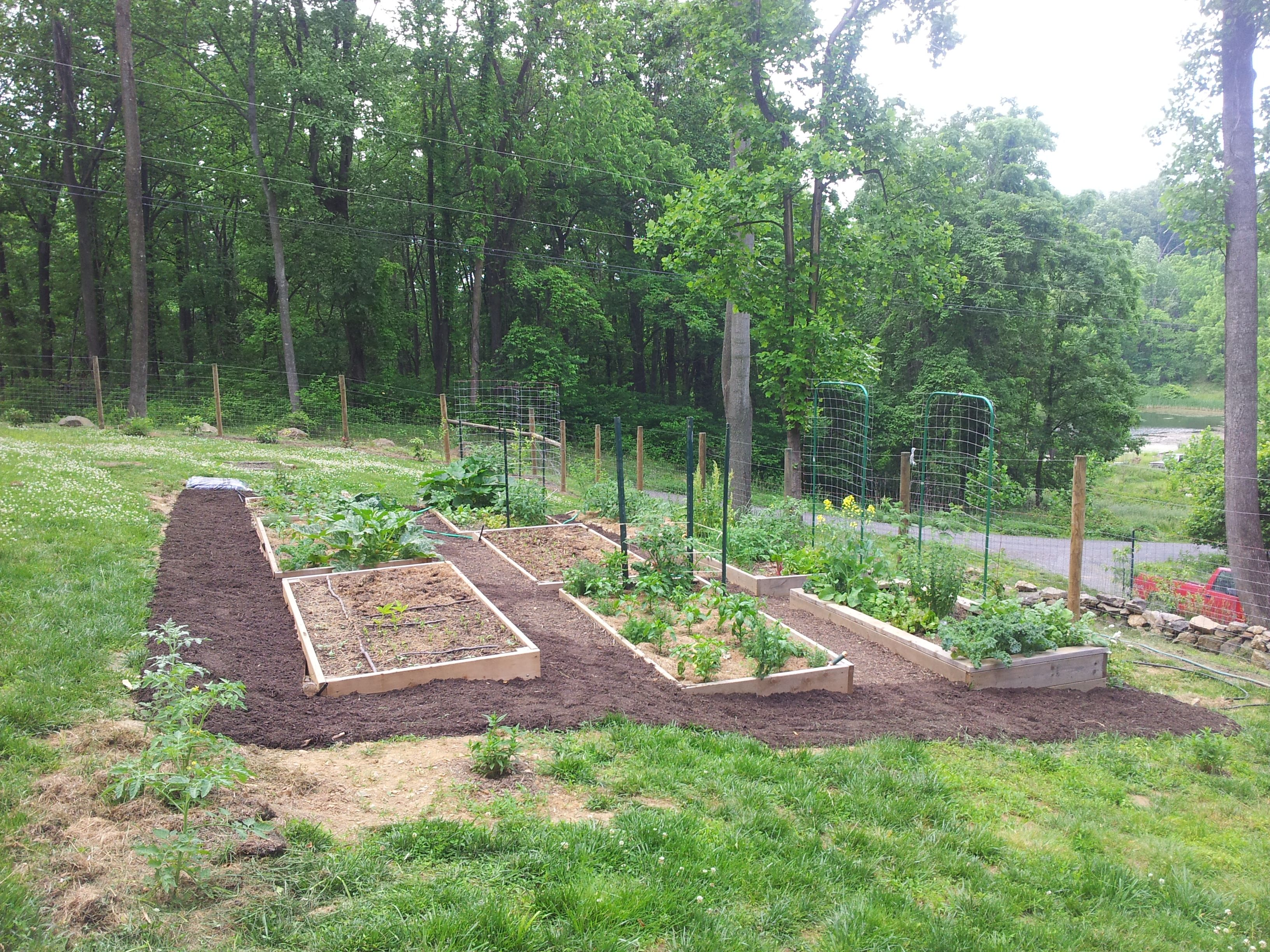 Permaculture beginner Raised beds on drainfield