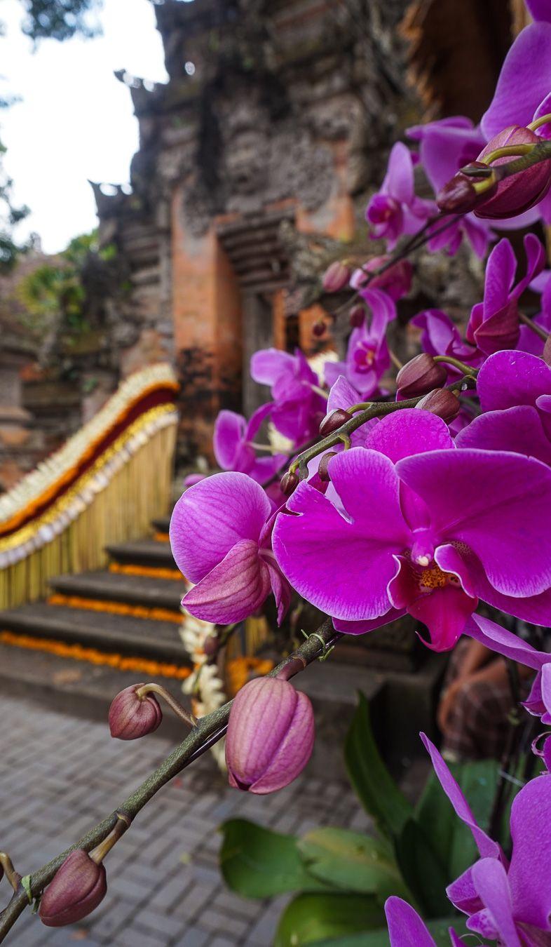 10 Reasons To Visit Bali Right Now | Bali travel, Bali ...