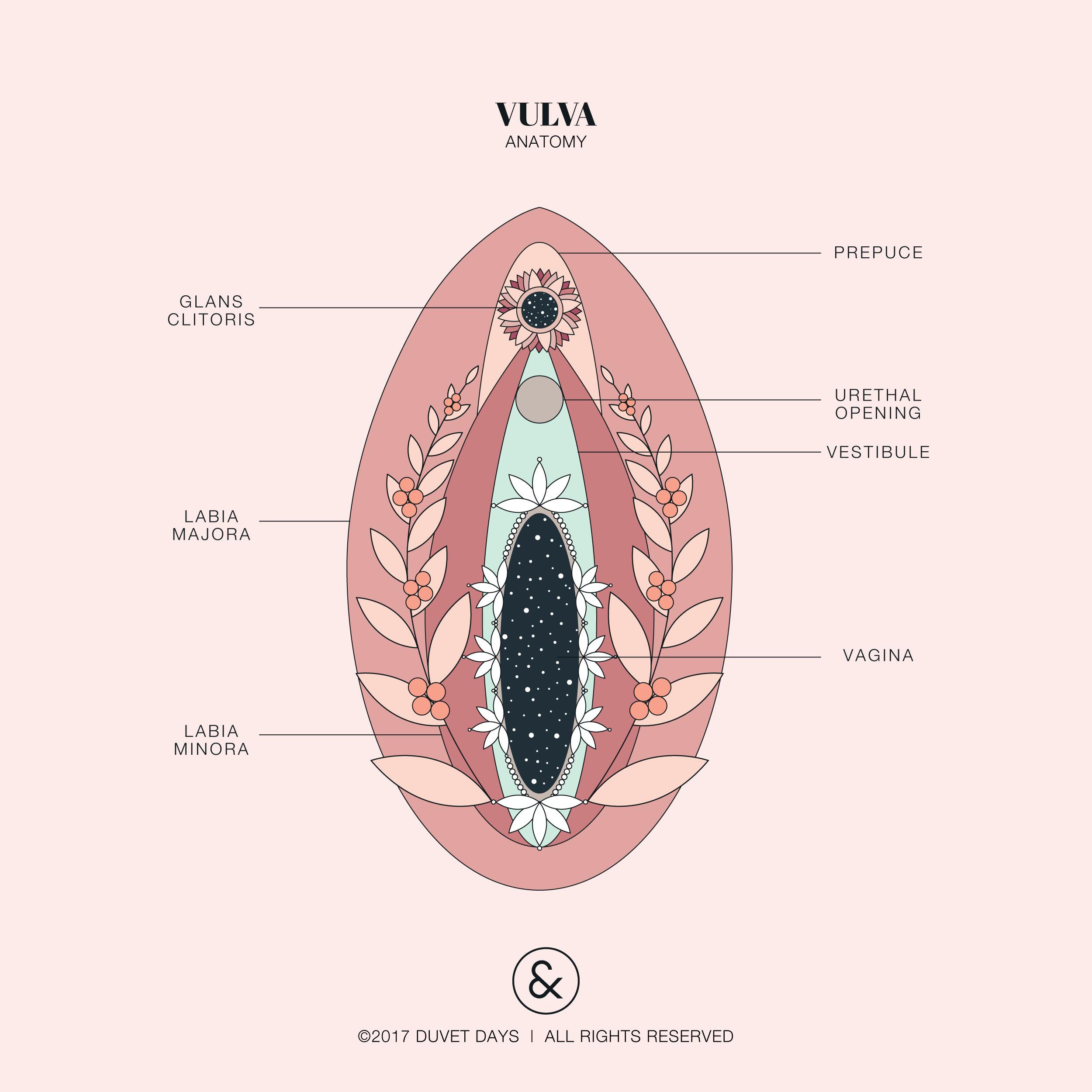 Like the colour palette | illustrations | Pinterest | Anatomy ...