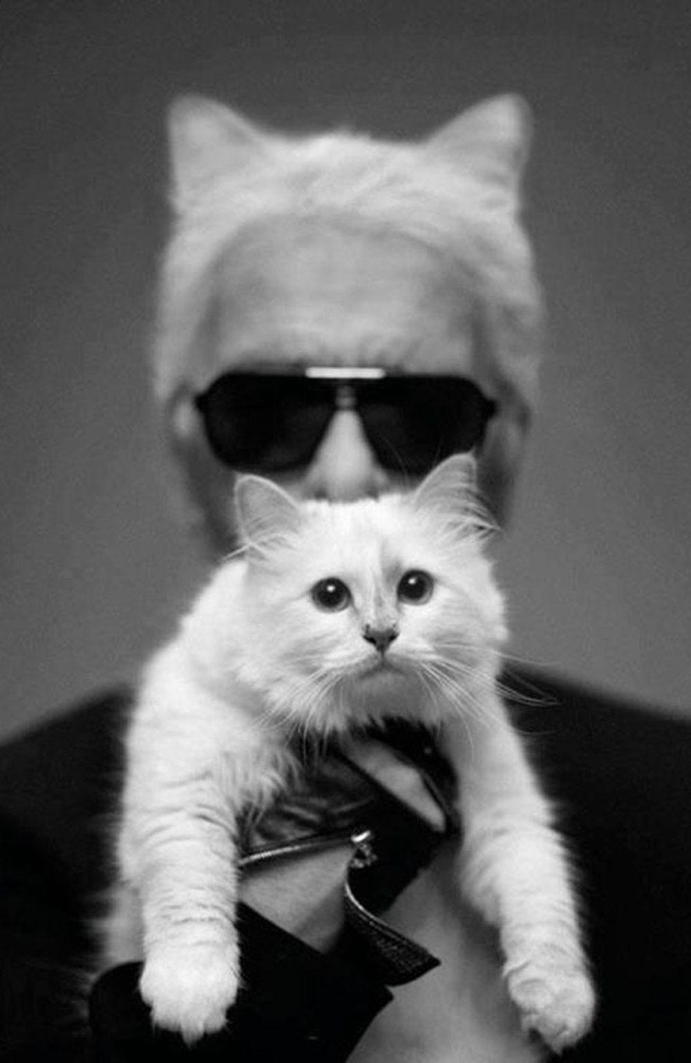 Karl Lagerfeld will seine Katze heiraten