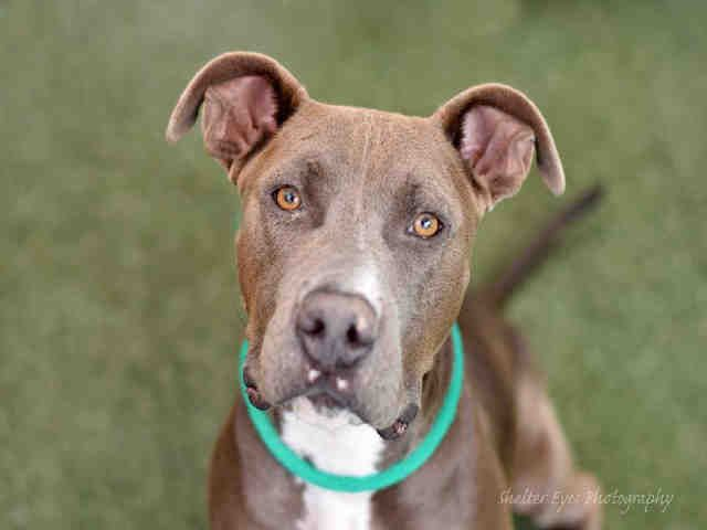 Animal Shelter adopt a pet; dogs, cats