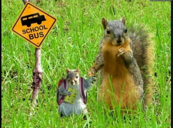 First day for squirrels.